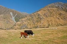 Mount Aspiring National Park Grasslands - South Island NZ