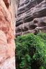 Mount Danxia Curvaceous Cliffs