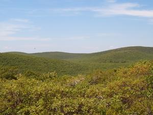 Monte Frissell