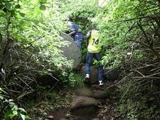 Mount Harriet National Park Trekking