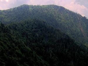Monte Kephart