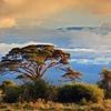 Mount Kilimanjaro Above Amboseli National Park In Kenya