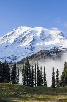 Mount Rainier From Mazama Ridge WA