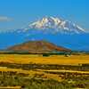 Mount Shasta View