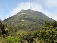 Mount Te Aroha Scenic Area