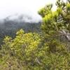 Mount Trusmadi - View