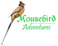 Mouse Bird Adventures