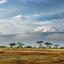 Mt Kilimanjaro View