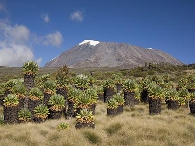 Mt. Kilimanjaro With Uhuru Peak - Tanzania
