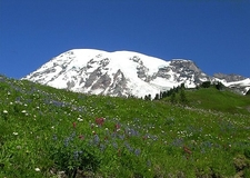Mt. Rainier NP Wildflower Meadow WA