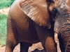 Hwange Elephant
