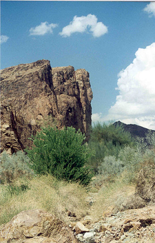 Muggins Peak