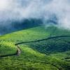 Munnar Tea Gardens - Kerala