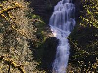 Munson Creek Falls State Natural Site
