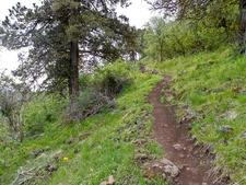 Murphy Ranch Trail 141 - Tonto National Forest - Arizona - USA