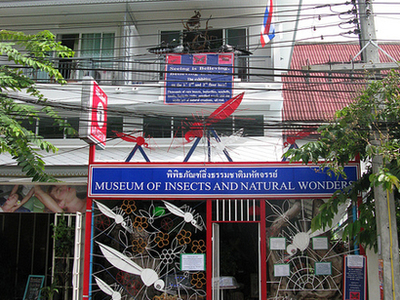 Museum Of Insects And Natural Wonders