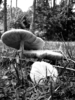 Mushrooms In The Osceola National Forest