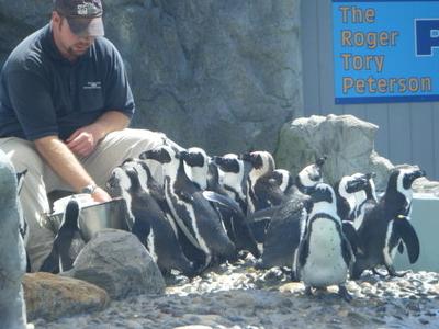 Mystic Aquarium - Penguin Feeding