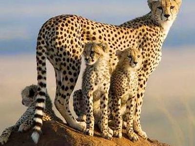 Mzava Tours & Safaris
