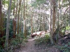 Rainforest At Macquarie Pass National Park