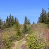 Maddron Bald Trail