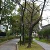 Maidashi Ryokuchi