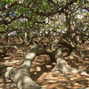 Interior Of The Tree