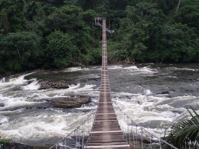 Mana Suspension Bridge At Korup National Park