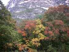 Fall Colors Of McKittrick Canyon