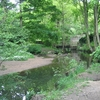 Meanwood Beck