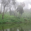 Meghamalai Forest