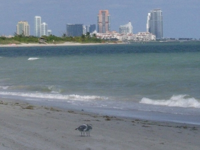 Fisher Island And South Beach From Crandon