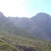 Peninsula Sandstone Fynbos