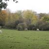 Mill Hill Substation Pastures