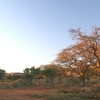 Mokala Parque Nacional
