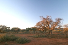 Mokala National Park