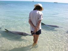 Daily Feeding Of Bottlenose Dolphins