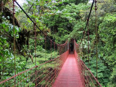 Suspension Bridge In The Reserve