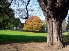 Montsouris Park Painted Buckeye