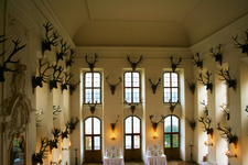 Collection Of Deer Antlers