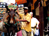 Morocco  Fes  Camel