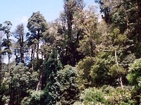 Mount Hyland Nature Reserve