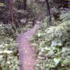 Mount Keira Ring Track