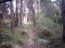 Mount Kembla Summit Track