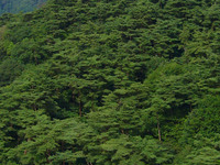 Mount Rokkō
