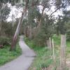 Mullum Mullum Creek Trail Through The Linear Park