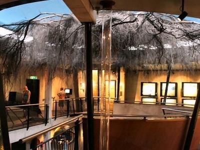 Tree In Museum
