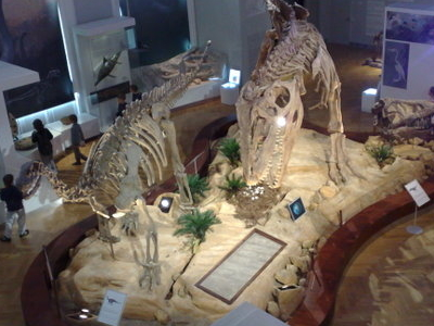 Dinosaur Skeletons In The Museum.