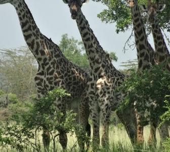 Nakuroi Tours And Safari Company Limited