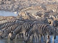 Parque Nacional de Etosha